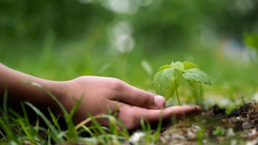 W czwartek o godz. 10.00 w budynku Starostwa Powiatowego przy ul. Kwiatowej 1a rusza największa konferencja ekologiczna w naszym regionie – EKO MOZAIKA 2019.