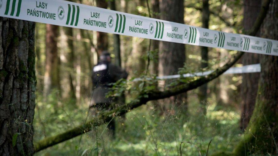 Lasy Państwowe wprowadzają tymczasowy zakaz wstępu do lasu, a Parki Narodowe pozostają zamknięte.