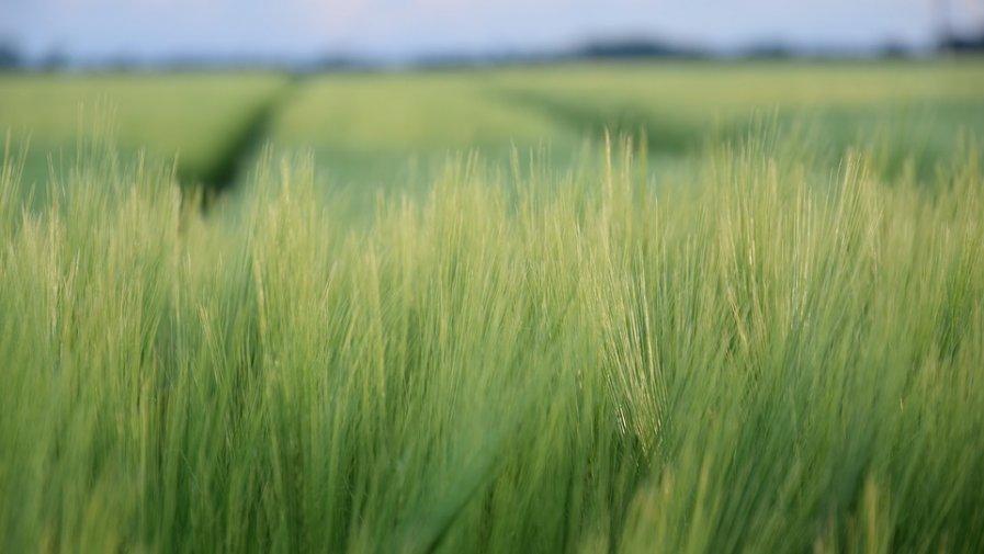 Rolnicy posiadający mniej niż 10 ha gruntów ornych również w tym roku mogą złożyć, zamiast e-wniosku o płatności bezpośrednie i obszarowe z PROW 2014-2020, oświadczenie potwierdzające brak zmian w stosunku do wniosku z roku poprzedniego.