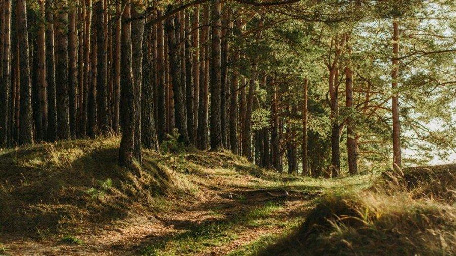 Nadzór nad lasami niestanowiących własności Skarbu Państwa (lasy prywatne)