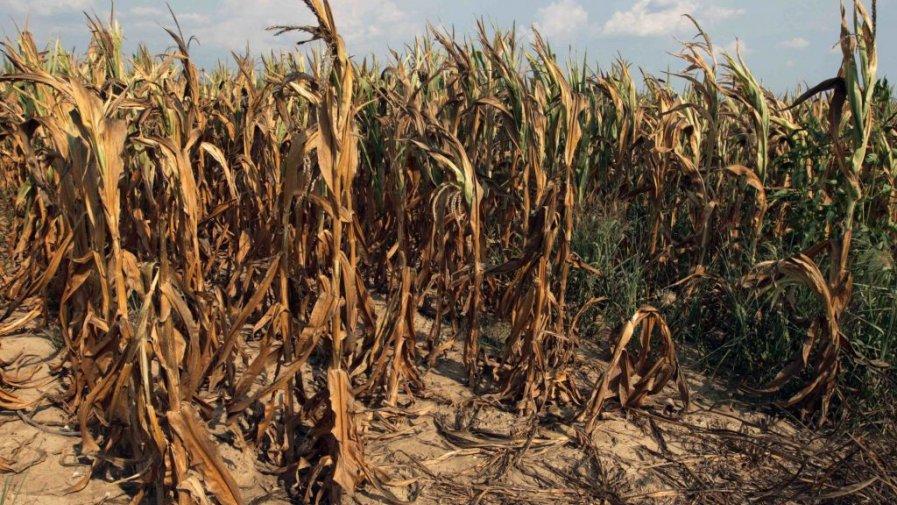 ARiMR – trwa nabór wniosków o wsparcie dla rolników poszkodowanych przez COVID-19 i ubiegłoroczną suszę.