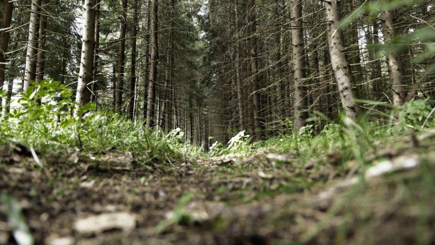 Nadzór nad lasami niestanowiących własności Skarbu Państwa (lasy prywatne, osób fizycznych)- Harmonogram dyżurów.